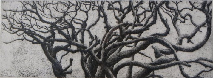 "ZC Tanja Riese ""Eucalypts"" 16 x 19 cm"