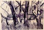Alicia Katchaturian - Gum tree study  3